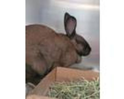 Adopt REESE a Black Other/Unknown / Mixed rabbit in Albuquerque, NM (31541496)