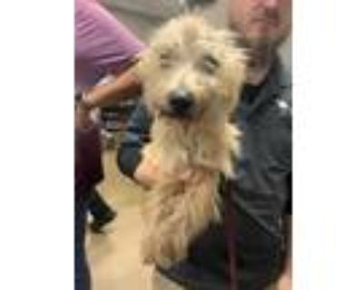 Adopt Tanner*- ADOPTED a Tan/Yellow/Fawn Terrier (Unknown Type