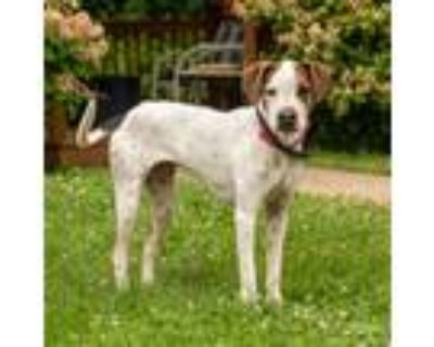 Adopt lolly a Pointer