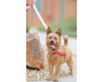 Adopt Twizler a Australian Cattle Dog / Blue Heeler