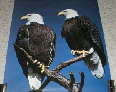 "Bald Eagles Poster Print #79 (16"" x 22"")"