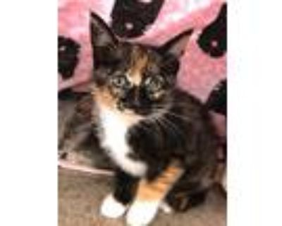 Spookie, Domestic Shorthair For Adoption In Clinton, South Carolina