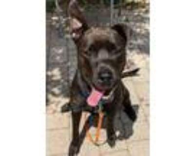 Adopt Mimi a Black Labrador Retriever / Mixed dog in Washington, DC (31705941)