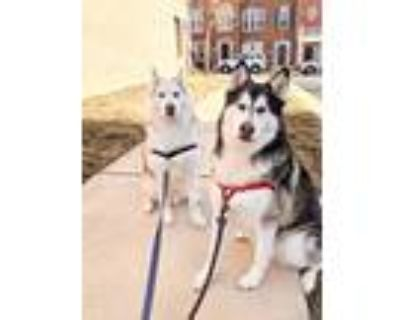 Adopt Sapphire & Diesel-Bonded Pair! Courtesy Post a Husky / Mixed dog in
