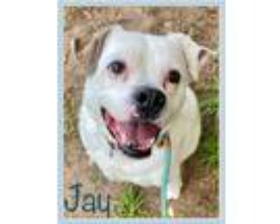 Adopt JAY - see video a Boxer