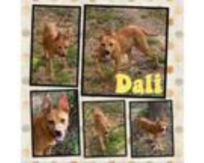 Adopt Dali a Hound