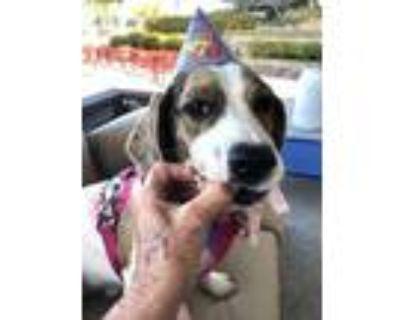 Adopt Jelly a Basset Hound