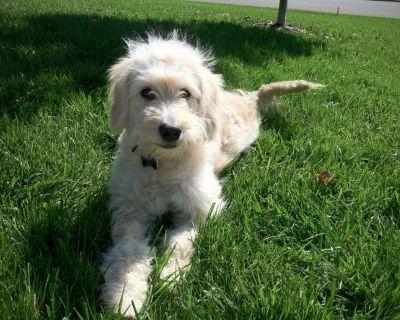 Affordable Dog Fencing | Pet Fencing