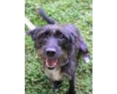 Adopt Molly a Black Terrier (Unknown Type, Small) / Mixed dog in Williamsburg