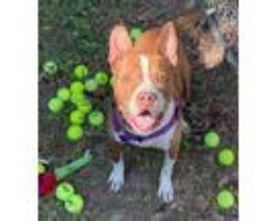 Adopt Baja a Mixed Breed (Large) / Mixed dog in Portsmouth, VA (28964473)
