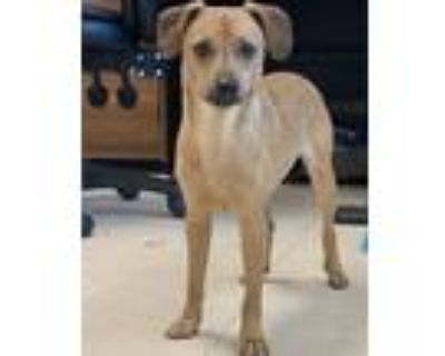 Adopt Kiko a Terrier (Unknown Type, Medium) / Mixed Breed (Small) / Mixed dog in