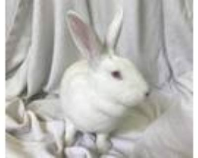 Adopt BERTHA a White Other/Unknown / Mixed rabbit in Los Angeles, CA (31090150)