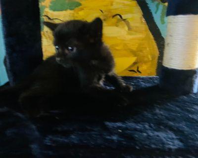 6 week old kittys