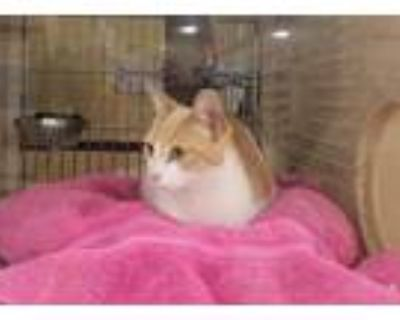 Adopt Brooke a White (Mostly) Domestic Shorthair (short coat) cat in Mobile