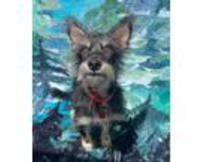 Adopt Gibbon a Tricolor (Tan/Brown & Black & White) Cairn Terrier / Mixed dog in