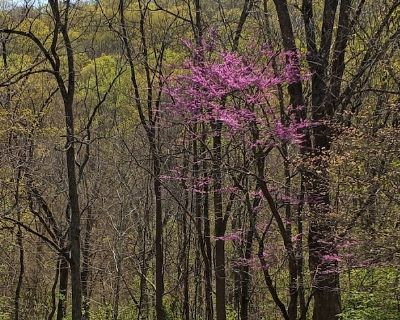 Spring Mountain Yellow House with Waterfront and Perkiomen Walking Trail - Spring Mount