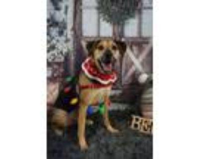 Adopt Lucky a Hound, German Shepherd Dog