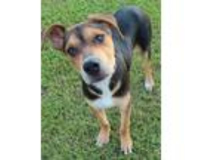 Adopt Ty a Mixed Breed (Medium) / Mixed dog in Little Rock, AR (31680899)