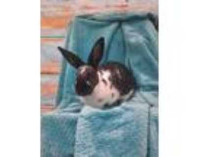 Pepper, Other/unknown For Adoption In Cheyenne, Wyoming
