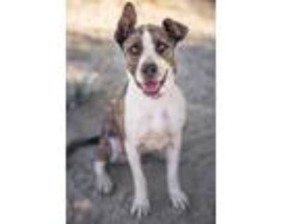 Adopt Ruth a Brindle Mixed Breed (Large) / Mixed dog in Palm Springs