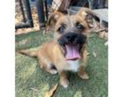 Adopt Buckwheat a Terrier