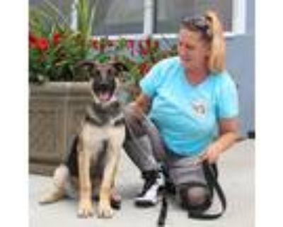 Adopt Maggie von Nebra+ a German Shepherd Dog
