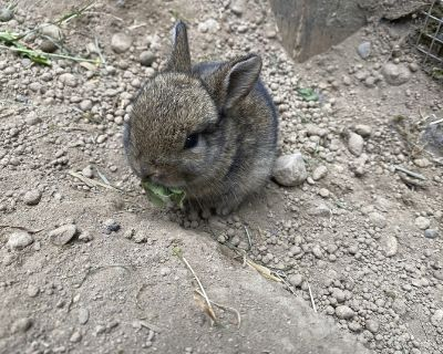 Free Baby Bunnies!