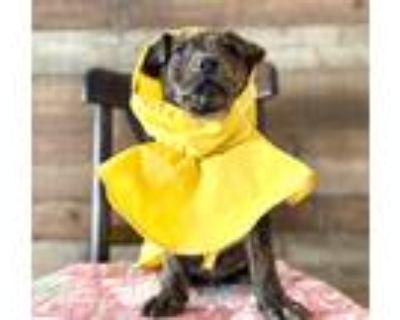 Adopt Dandelion a Mixed Breed (Medium) / Mixed dog in Park City, UT (30623574)