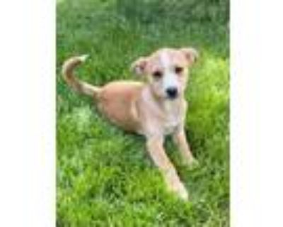 Nettle, Terrier (unknown Type, Small) For Adoption In Downers Grove, Illinois