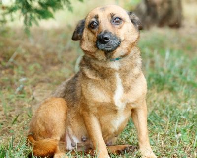 Aurora P 11363 - Mixed Breed (Small) - Adult Female