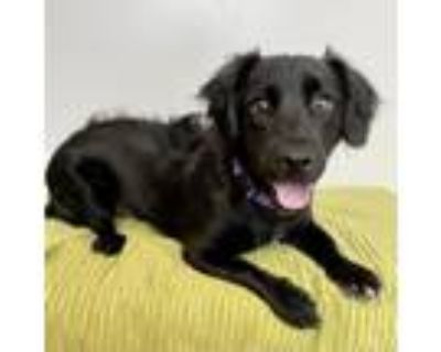 Adopt Oso a Black Mixed Breed (Small) / Mixed dog in Palm Springs, CA (31675744)