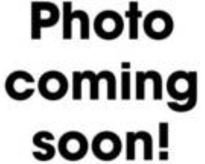 Adopt Hathor a All Black British Shorthair / Domestic Shorthair / Mixed cat in