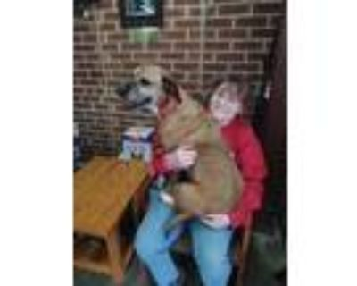 Adopt Missy a Boxer, Mixed Breed
