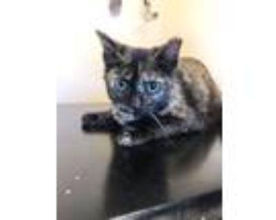 Adopt TOPAZ a Black (Mostly) Domestic Shorthair cat in Kennesaw, GA (30901752)