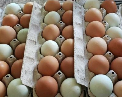 Fresh Local XL Eggs by Honour System in heart of Ladner! Dark brown, greens, & blues. Message for address! $6.50