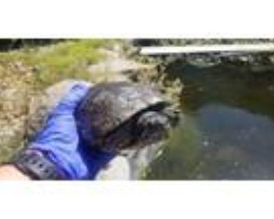 Adopt A092812 a Turtle