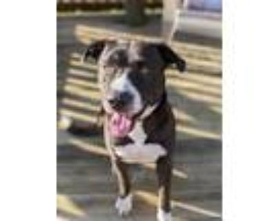 Adopt Phantom a Terrier (Unknown Type, Medium) / Mixed dog in Abbeville