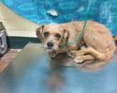 Adopt Dog a Terrier