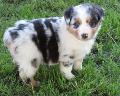 www.fifteenacrefarms.com Henryetta's Puppies