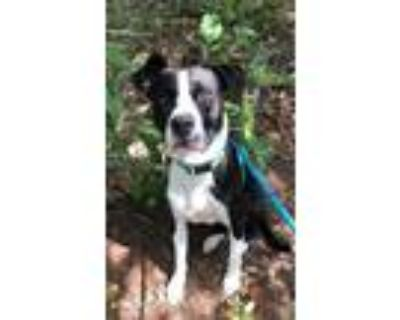 Adopt Manly a Mixed Breed