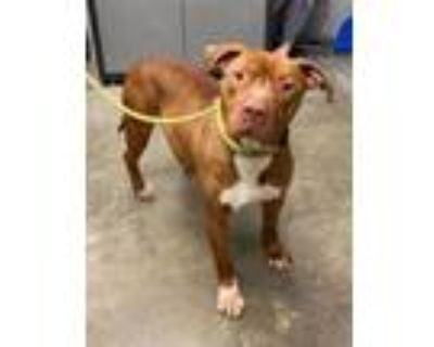 Adopt Munch (H+) a Terrier