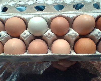 Eggs, organic, free-range, happy chickens!
