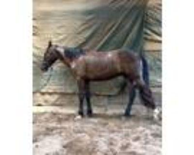 Mustang Project Gelding