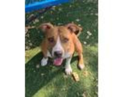 Adopt Addi a Terrier, Mixed Breed