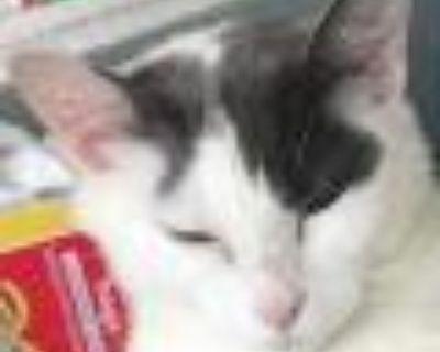 Gracie Mae - Domestic Longhair - Adult Female