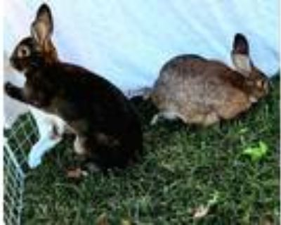 Adopt Liam and Kylie a Bunny Rabbit