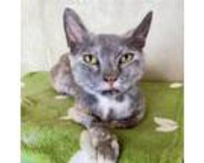 Adopt Phoebe a Domestic Shorthair / Mixed cat in Wilmington, DE (32540410)