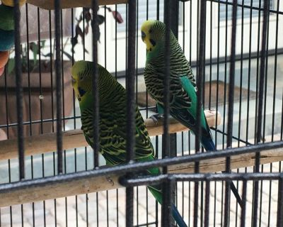 5 Cute Parakeets, take 1 or all FREE