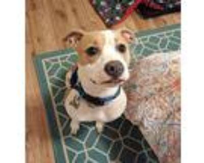 Georgia Girl, Pit Bull Terrier For Adoption In Alpharetta, Georgia