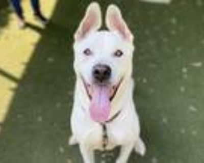 Adopt SPIKE a White Mixed Breed (Medium) / Mixed dog in Los Angeles